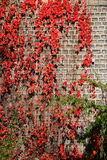 Autumn Leaves on Wall Royalty Free Stock Images