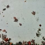 Autumn leaves on the wall stock image