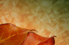 Autumn leaves wall texture Stock Image