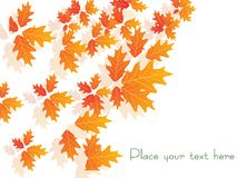 Autumn leaves, wallpaper Royalty Free Stock Image