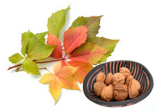 Autumn leaves with walnuts Royalty Free Stock Images