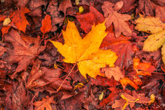 Autumn leaves in warm colors Royalty Free Stock Image
