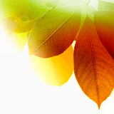 Autumn leaves in warm sunlight Stock Photography