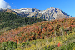 Autumn leaves in the Wasatch Mountains. Stock Photography