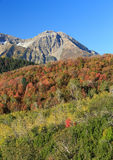 Autumn leaves in the Wasatch Mountains. Stock Images