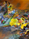 Autumn leaves in water. Autumnal leaves lying in a stream. A slow shutter speed was used to give the water its smooth appearance Stock Photo