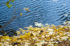 Autumn leaves in the water Royalty Free Stock Image