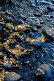 Autumn leaves and water Stock Photography