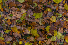 Autumn leaves. On the water Royalty Free Stock Image