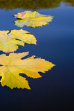Autumn leaves and water abstract background royalty free stock photos