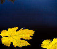 Autumn leaves and water abstract background royalty free stock images