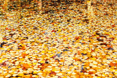 Autumn leaves on water Stock Photo