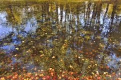Autumn leaves in water Royalty Free Stock Photo