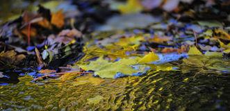 Autumn leaves on the water Royalty Free Stock Image