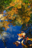 Autumn leaves in water Royalty Free Stock Photos