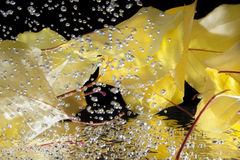 Autumn leaves in the water Royalty Free Stock Photos