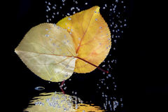 Autumn leaves in the water Stock Images