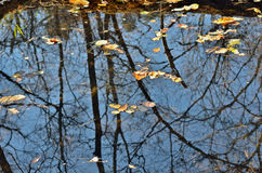 Autumn leaves on water 13 Stock Images
