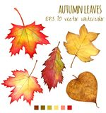 Autumn leaves a water color on a white background Stock Photo