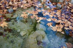Autumn leaves in a water. Fall background Stock Image