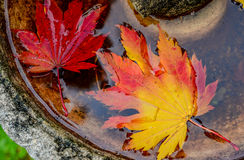 Autumn leaves in water fountain in fall Stock Photo