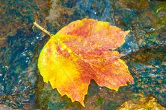 Autumn leaves in water Royalty Free Stock Images