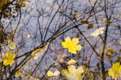Autumn leaves on water Royalty Free Stock Photos