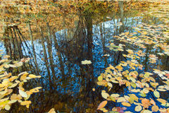 Autumn leaves on water Stock Photography