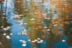Autumn leaves on water Royalty Free Stock Photography