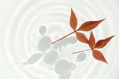 Autumn leaves and water ripple background Stock Photo