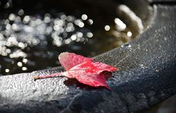 Autumn leaves on water sink with sun light royalty free stock photography