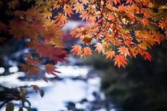 Autumn leaves beside the Water Stock Photography
