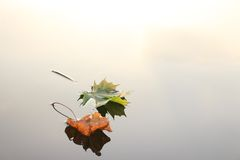 Autumn leaves on water surface Stock Image