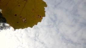 Autumn leaves on a water surface and sky. Leaves fall on water. shooting from underwater stock footage