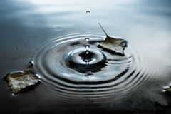 Autumn leaves on water surface Stock Photo