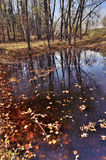 Autumn leaves in water with trees reflection. Royalty Free Stock Photography