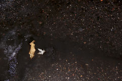 Autumn leaves on the water, wet snow. Autumn leaves, wet snow, puddles on the pavement Stock Image