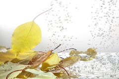Autumn leaves in the water Stock Image