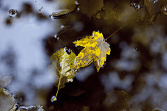 Autumn leaves on water Stock Images