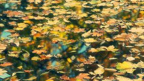 Autumn leaves in the water stock video