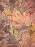 Autumn leaves watercolor Stock Images