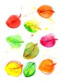 Autumn leaves watercolor. Many multi-colored autumn leaves in watercolors. autumn Stock Image