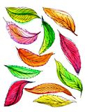 Autumn leaves watercolor. Many multi-colored autumn leaves in watercolors. Steep graphical contour Stock Photos