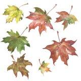 Autumn Leaves Watercolor Pattern vector illustration