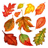 Autumn leaves a watercolor on a white background. vector illustration Stock Photos