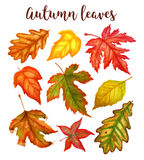 Autumn leaves a watercolor on a white background. vector illustration Royalty Free Stock Photo