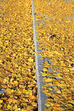 Autumn leaves on the way Royalty Free Stock Image
