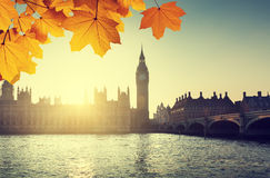 Autumn leaves and Westminster, London, UK Stock Images