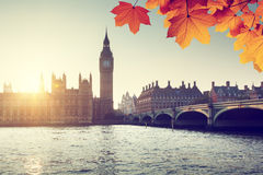 Autumn leaves and Westminster, London, UK Stock Photo