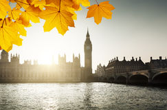 Autumn leaves and Westminster, London, UK Royalty Free Stock Photos